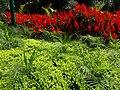 Beautifull Flower at Selecta - panoramio (1).jpg