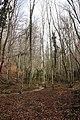 Beech trees (12746151773).jpg