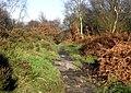 Beginning of the trees - geograph.org.uk - 2162974.jpg