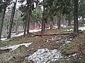 Bielawa, Poland - panoramio (50).jpg
