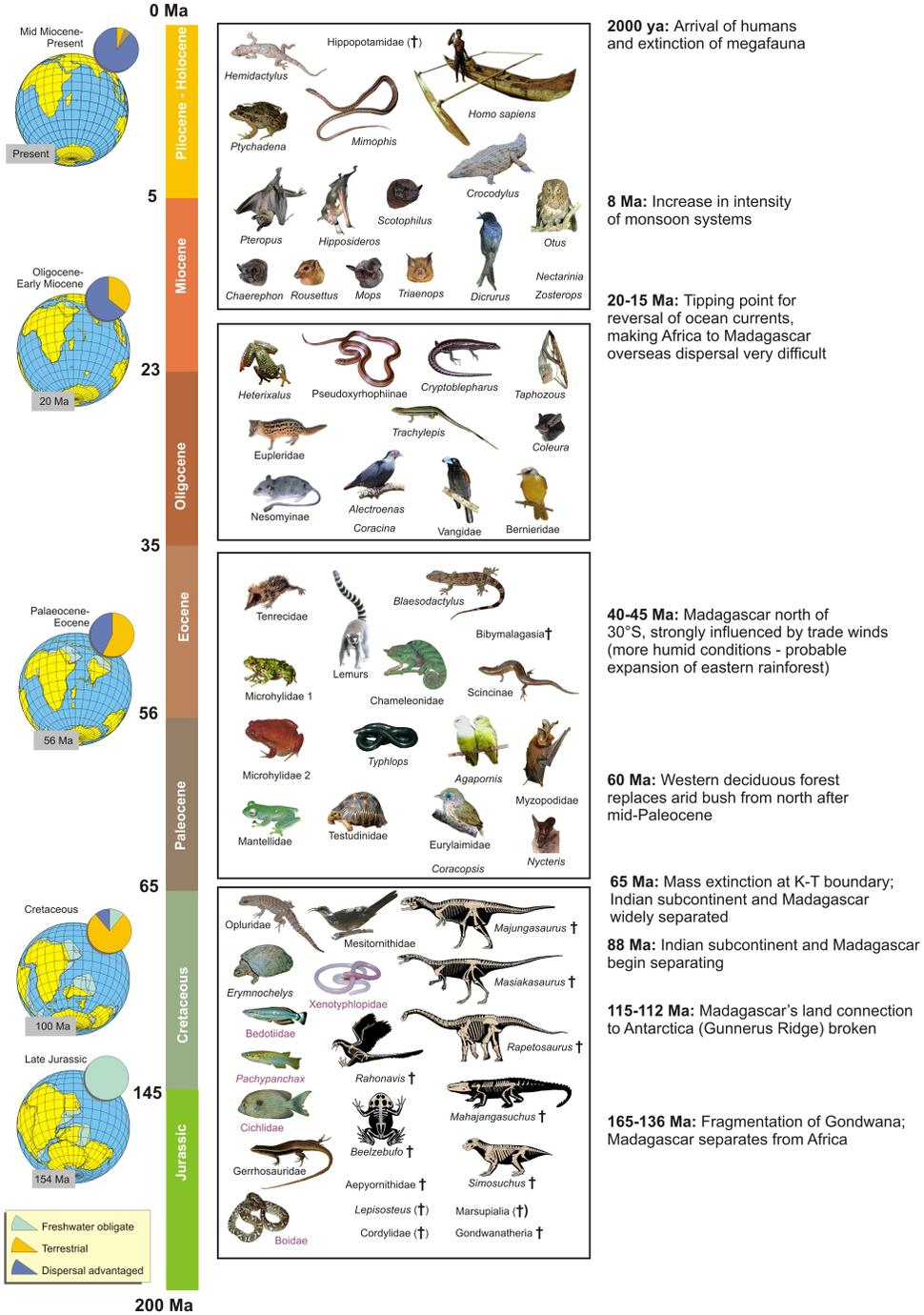 Biogeographic timetable of Madagascar - journal.pone.0062086.g003