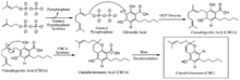 Biosynthesis of CBC