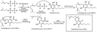Cannabichromene - CBC biosynthetic scheme