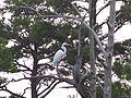 Bird (5816336885) (2).jpg