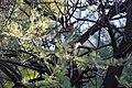 Bird Botswana 01.jpg