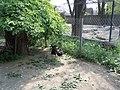 Black Stork in Odessa Zoo 1.jpg