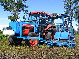 Vaccinium angustifolium - A tractor harvesting blueberries at a farm in New Brunswick, Canada