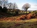 Blissford Hill - geograph.org.uk - 655939.jpg