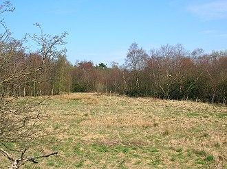 Bloak - Bloak or Kirkwood Moss.