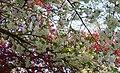 Blossoms 15.jpg