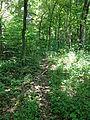 Bootleg Access trail.JPG