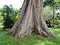 Botanical Garden of Peradeniya 34.JPG