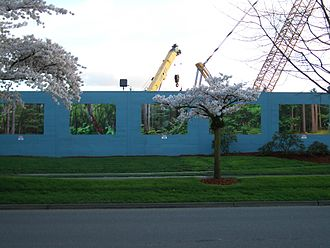 Potemkin village - Construction or not, motorists and pedestrians in Bothell, Washington, can see a forest-like view