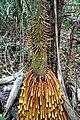 Brazil-00562 - Palm Tree (48966820506).jpg