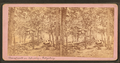 Breastworks on left wing, Gettysburg, from Robert N. Dennis collection of stereoscopic views.png