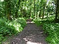 Bridleway through Moor Wood - geograph.org.uk - 1716060.jpg