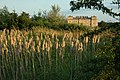 Bull rushes and Croome Court - geograph.org.uk - 1421434.jpg