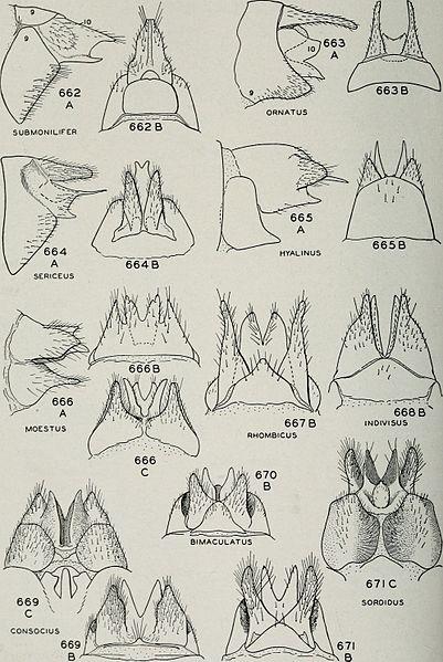 File:Bulletin (1944) (20420036262).jpg