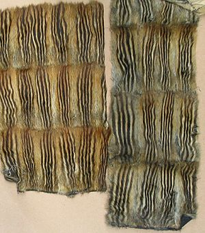 Siberian chipmunk - Burunduk fur-skins