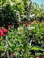 Butchart Gardens - Victoria, British Columbia, Canada (29161398165).jpg