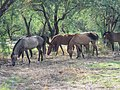 Butcher Jones Road, Tonto National Forest, Fort McDowell, AZ 85264, USA - panoramio (8).jpg