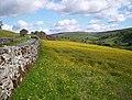 Buttercao Meadow - geograph.org.uk - 1351172.jpg