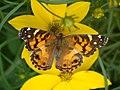 Butterfly House 4.JPG