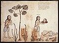 Códice Casanatense Hindu Self-Sacrifice.jpg