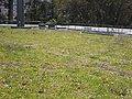 CA Academy of Sciences Living Roof 6.JPG