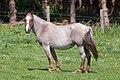 Cabalo, Vilarromarís, Oroso.jpg