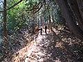 Caledon trail (5091393338).jpg