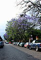 Calle Aldama..JPG