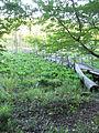 Calvert Cliffs State Park - Lusby, Maryland (14610691399).jpg