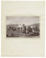 Camelus dromedarius - 1700-1880 - Print - Iconographia Zoologica - Special Collections University of Amsterdam - UBA01 IZ21600033.tif
