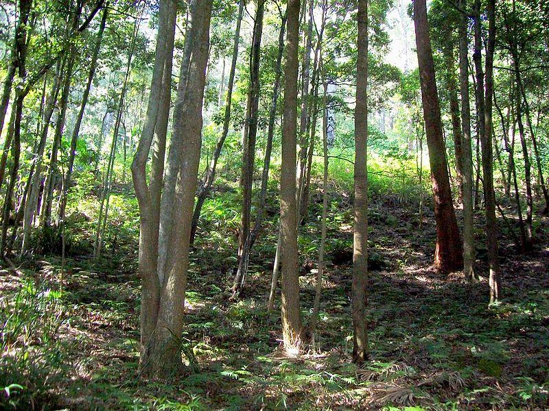 Sassafras Gully Australia  city photos : Datei:Camp Gully Sassafras – Wikipedia