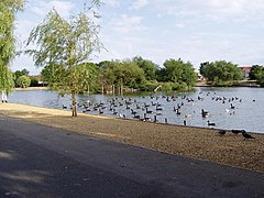 Canada geese on Baffins pond - geograph.org.uk - 718156.jpg