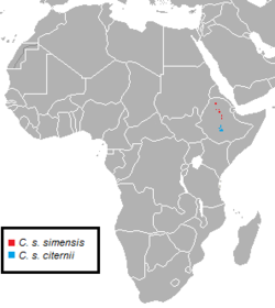 Canis simensis subspecies range.png