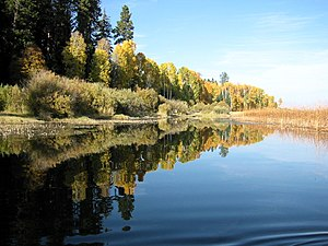 Upper Klamath Lake Canoe trail; Populus tremul...