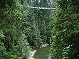 Capilano Suspension Bridge3.jpg