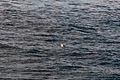 Casco bay whale watching 08.07.2012 16-11-16.jpg