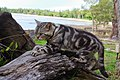 Cat 1 Jpg (124206227).jpeg
