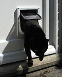 Cat emerging from a cat flap