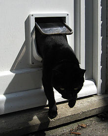 A Cat Flap In Action
