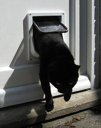 Pet door - A cat flap in action
