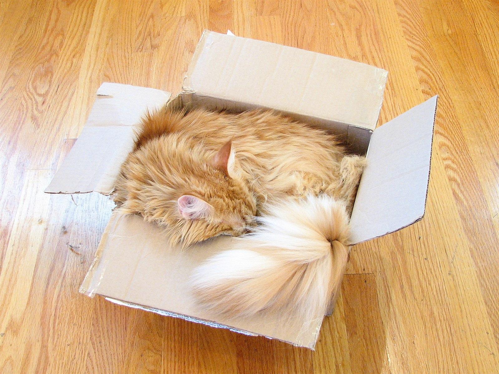fluffy orange cat sleeping in a box