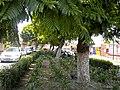 Centro, Tlaxcala de Xicohténcatl, Tlax., Mexico - panoramio (19).jpg