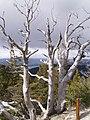 Cerro Campanario - panoramio - bullit (10).jpg