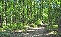 Chemin des Bruyères de Montubois (forêt de Montmorency) - panoramio - Eric Bajart.jpg