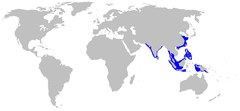 Range of the grey bamboo shark