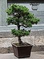 China Schanghai Jade Buddah Temple 5176520.jpg